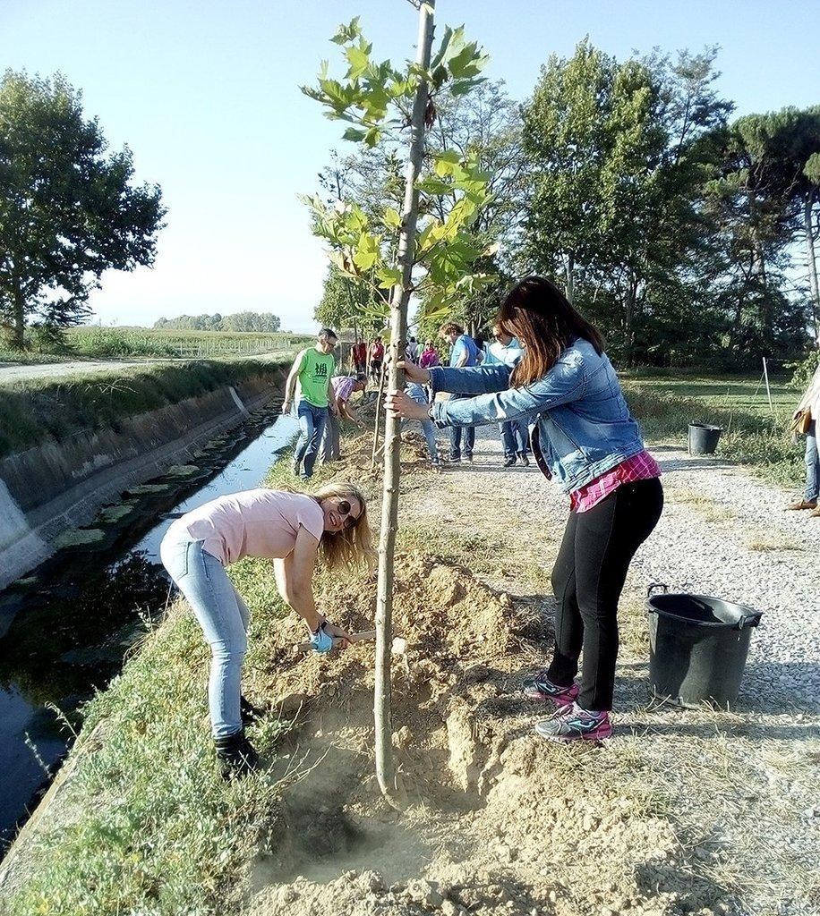 Els participants en el Dia de la Comarca planten plataners